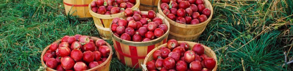 jonathan jablka, najlepsia jablkovica